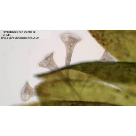 Microscope Bresser Bioscience 40-1000x trinoculaire