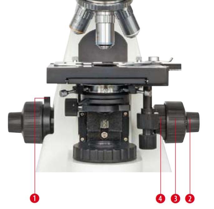 Microscope Bioscience trinoculaire : Mise au point macrométrique et micrométrique